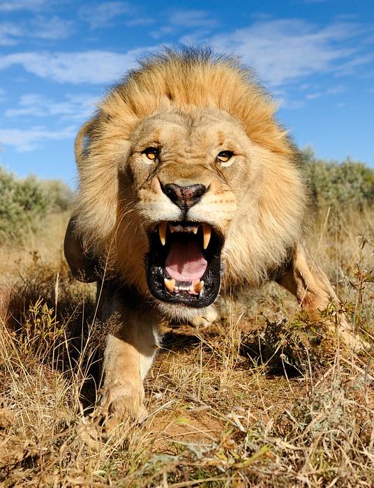 Красивые фото животных 36