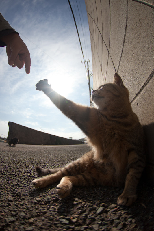 Фотоподборка. Животные и люди 13