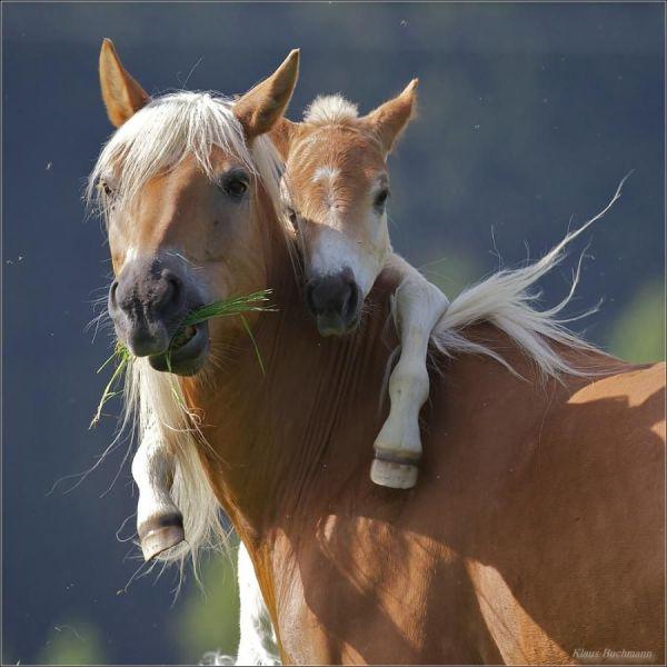 Красивые фото животных 19