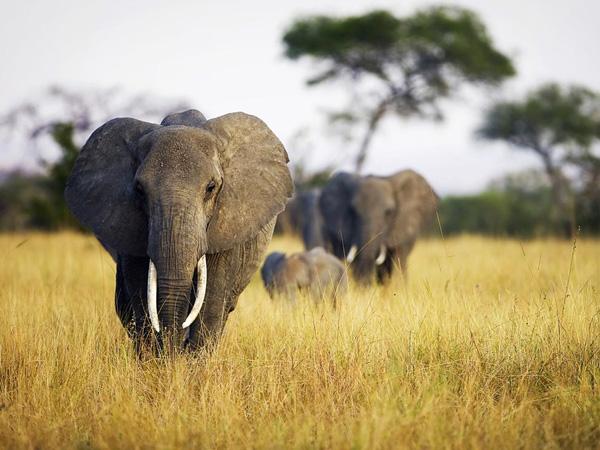 Красивые фото животных 13