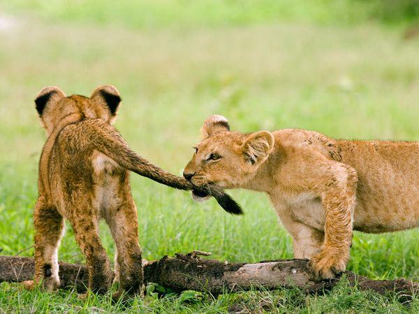 Красивые фото животных 22