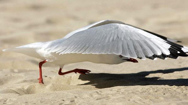 Красивые фото животных 31