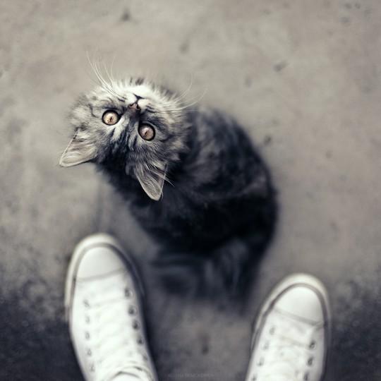 Фотоподборка. Животные и люди 12