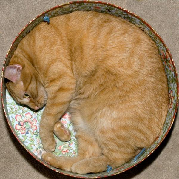 Кошки в упаковке )