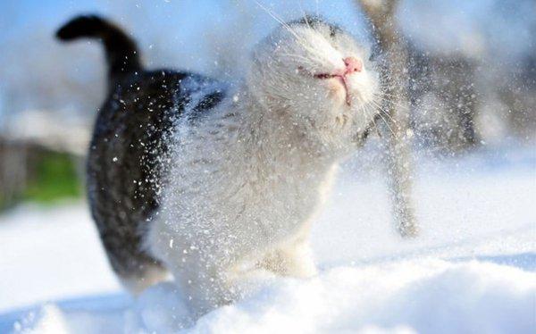 Красивые фото животных 42
