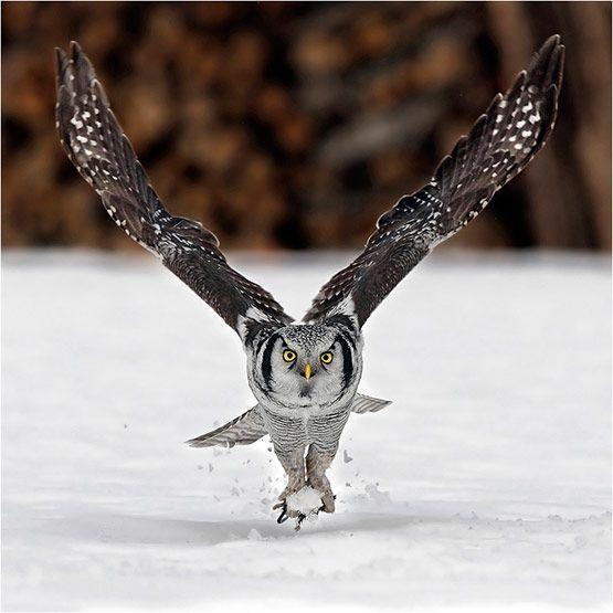 Красивые фото животных 23