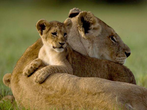 Красивые фото животных 26