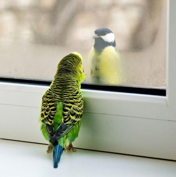 Красивые фото животных 25