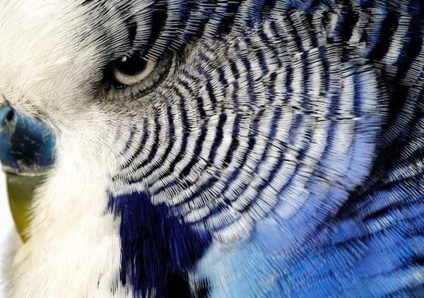 Красивые фото животных 11