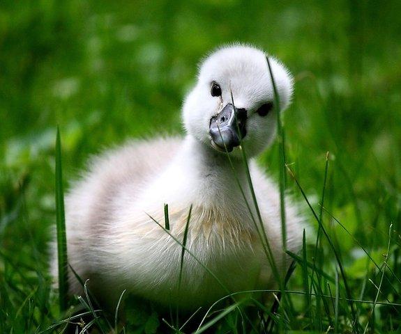 Красивые фото животных 12