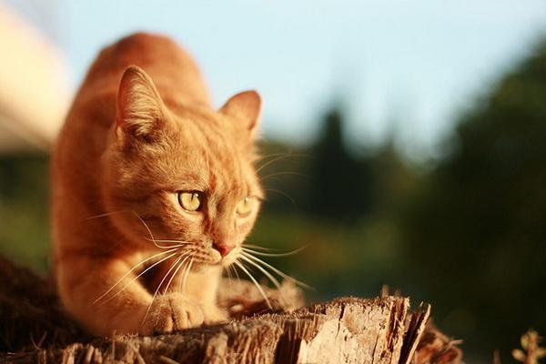 Красивые фото животных 30