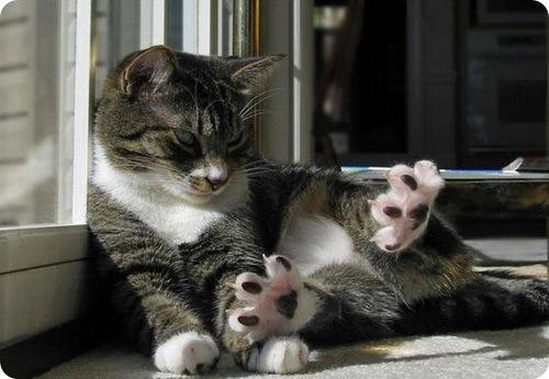 Самые необычные кошачьи повадки