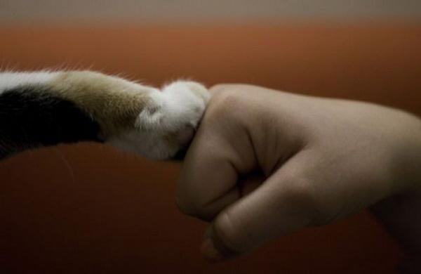 Фотоподборка. Животные и люди 8