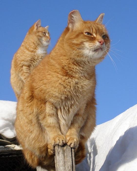 Кошки.Заборные творения:)