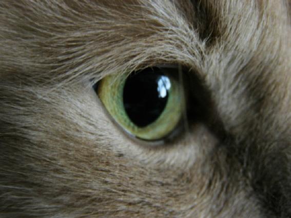 Макро. Кошачий взгляд