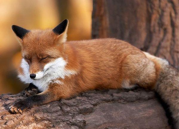 Красивые фото животных 16