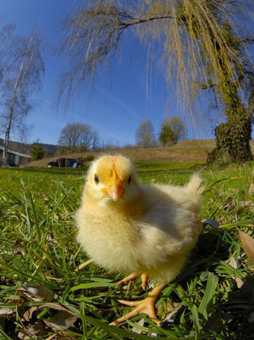 Красивые фото животных 9