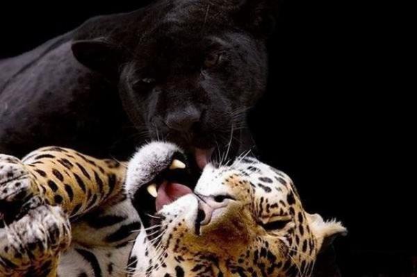 Красивые фото животных 40