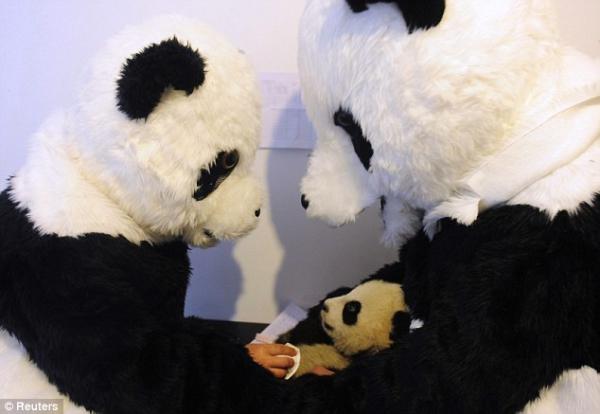 Китайские учёные  и панды