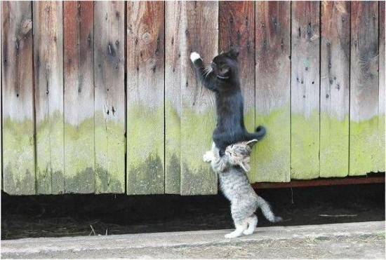 Животные - друзья