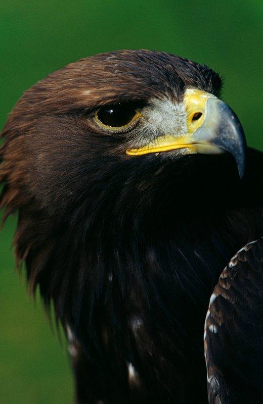 Красивые фото животных 41