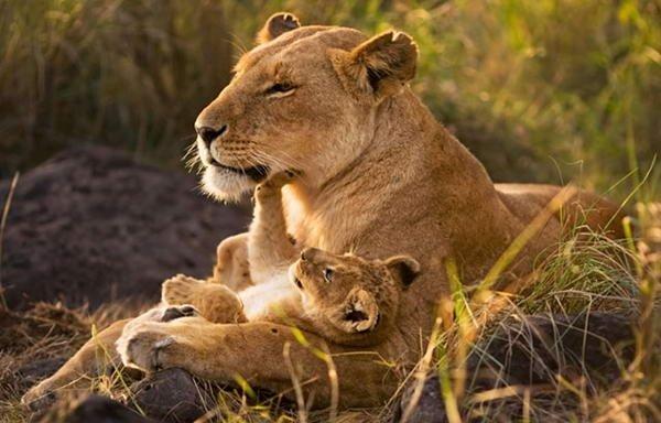 Красивые фото животных 6