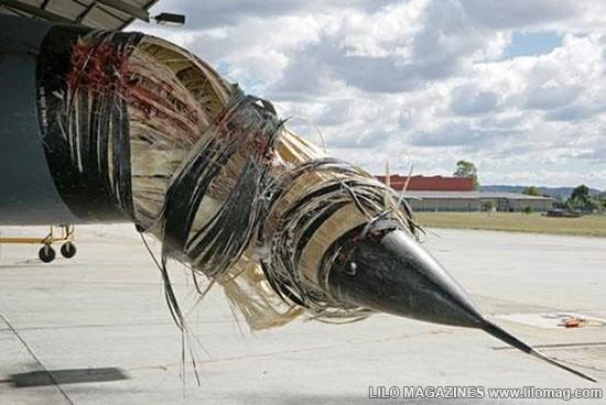 Птицы + самолёты.. Что бывает.