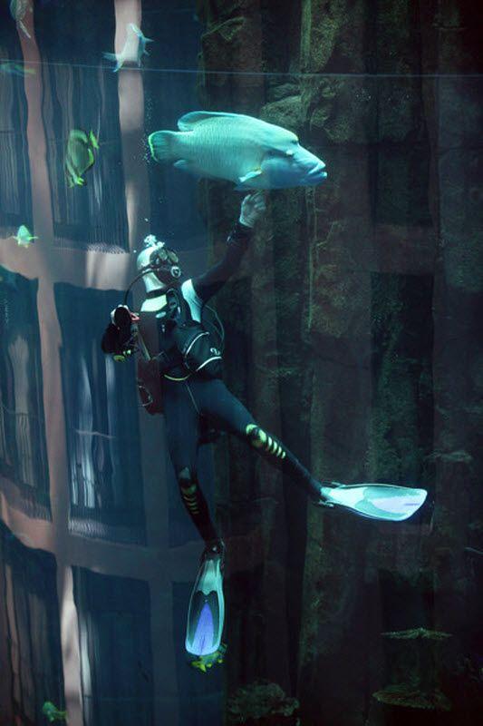 """Аквариум """"AquaDom"""""""