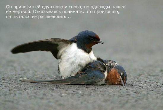 Птицы тоже умеют любить