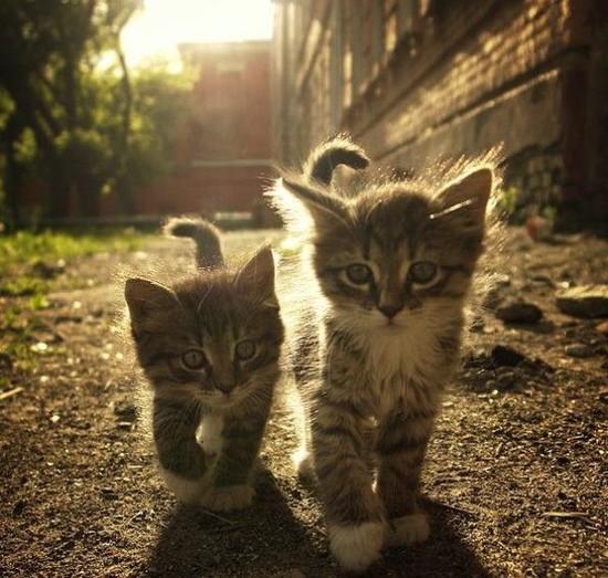 Красивые фото животных 5