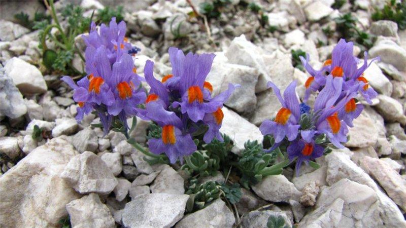 Горные цветы стихи