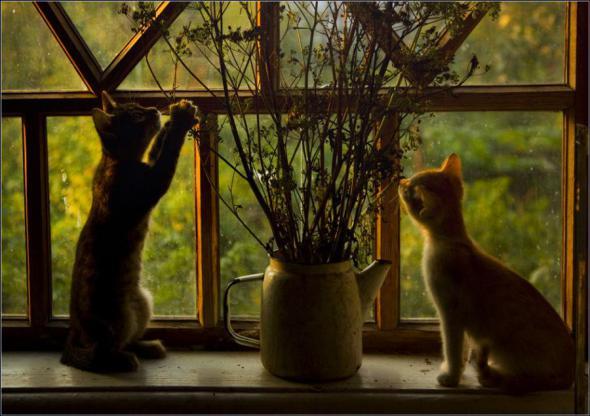 Красивые фото животных 38