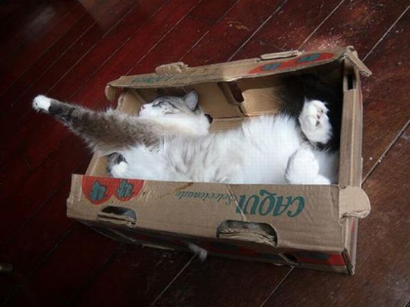Коты, кошки, котята )