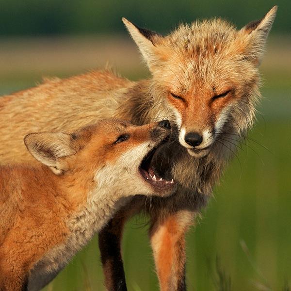 Красивые фото животных 3