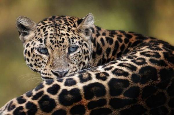 Красивые фото животных 33
