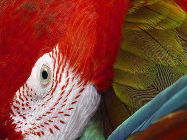 Красивые фото животных 14