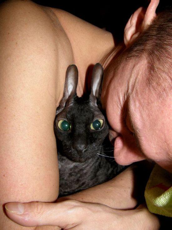 Животные и люди