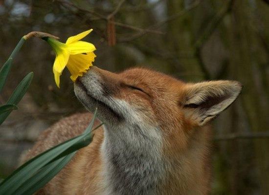 Красивые фото животных 17