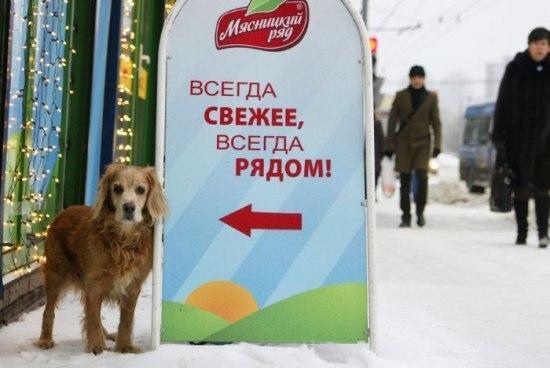 Всегда свежее, всегда рядом))