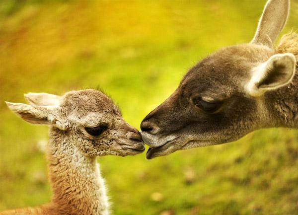 Красивые фото животных 21