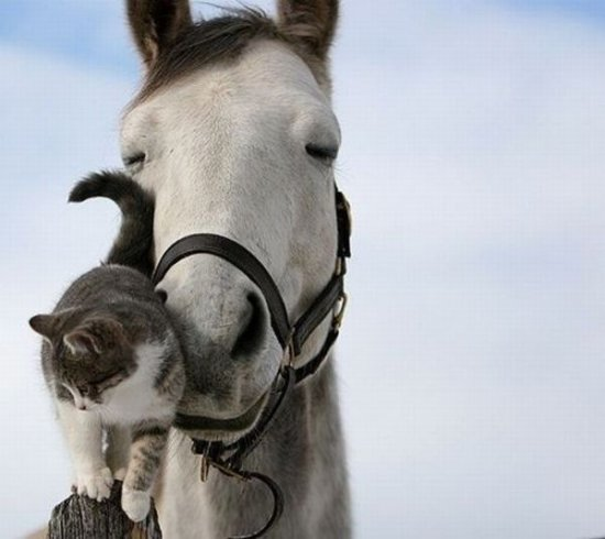 Красивые фото животных 37