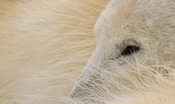 Красивые фото животных 24