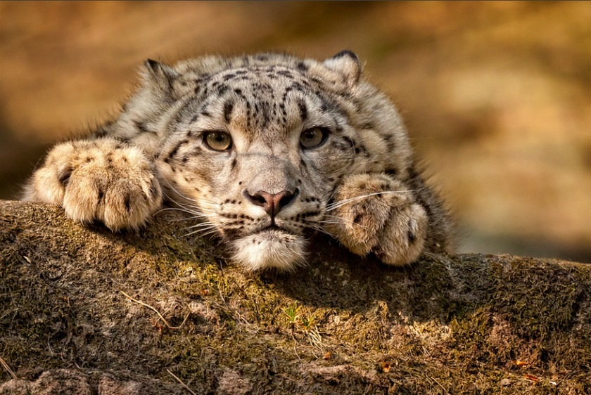 Красивые фото животных (5 фото) - Kaifolog ru